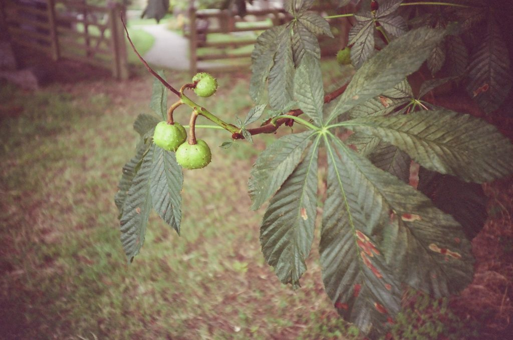 sample photo zenit loml LC-A